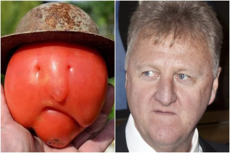 Larry Bird Tomato